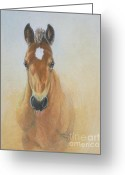 Colored Pencil Greeting Cards - Foal Study Greeting Card by Carrie L Lewis