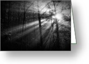Matthew Trimble Greeting Cards - Foggy Forest Greeting Card by Matt  Trimble
