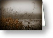 Foggy Morning Greeting Cards - Foggy Morning Marsh Greeting Card by Carolyn Marshall