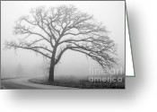 Winter Road Greeting Cards - Foggy Oak Greeting Card by David Bearden