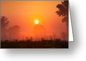 Goose Greeting Cards - Foggy Sunrise In The Prairie Greeting Card by Steve Gadomski