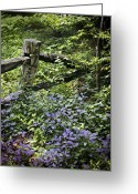 Wood Fences Greeting Cards - Foliage Covers A Wood Fence In Long Greeting Card by Rex A. Stucky