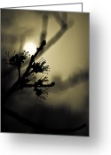 Sun Flare Greeting Cards - Foliage in Motion Greeting Card by Andrew Kubica