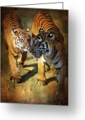 Big Cat Art Prints Greeting Cards - Follow me Greeting Card by Zsuzsanna Szugyi