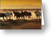Zapata Greeting Cards - Follow the Dust Greeting Card by Judy Neill