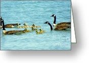 Baby Birds Greeting Cards - Follow the Leader Greeting Card by Karen Wiles