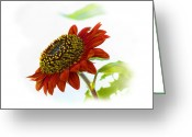 Larry Walker Greeting Cards - Follow The Sun Sunflower Greeting Card by J Larry Walker