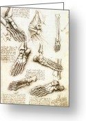 Vinci Greeting Cards - Foot Anatomy By Leonardo Da Vinci Greeting Card by Sheila Terry