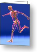 Kicking Football Greeting Cards - Football Kick, Skeleton Artwork Greeting Card by Roger Harris