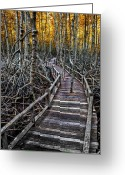Golden Digital Art Greeting Cards - Footpath in mangrove forest Greeting Card by Adrian Evans