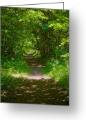 Shade Pyrography Greeting Cards - Footpath lined with hazel. Greeting Card by Kathleen Smith