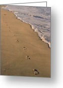Surf Art Greeting Cards - Footprints Left Behind Greeting Card by Suzanne Gaff