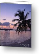 Tropical Sunset Greeting Cards - Footsteps Greeting Card by Corinne Rhode