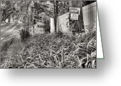Country Dirt Roads Photo Greeting Cards - For the Love of Dog BW Greeting Card by JC Findley