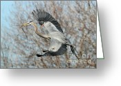Herons Greeting Cards - For the Nest Too Greeting Card by Sabrina L Ryan