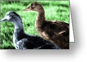 Feeding Mixed Media Greeting Cards - Foraging Ducks on Grass Greeting Card by Steve Ohlsen