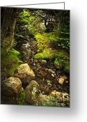 Growing Water Greeting Cards - Forest creek Greeting Card by Elena Elisseeva
