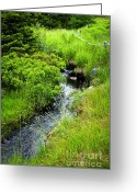 Wooden Fence Greeting Cards - Forest creek in Newfoundland Greeting Card by Elena Elisseeva