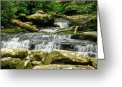 Pensive Greeting Cards - Forest Falls Greeting Card by Christi Kraft