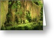 Lichen Greeting Cards - Forest Fantasy - Quinault - Gateway to Paradise on the Olympic Peninsula WA Greeting Card by Christine Till