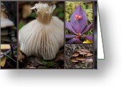 Brown Tones Photo Greeting Cards - Forest Floor Greeting Card by Lisa Knechtel