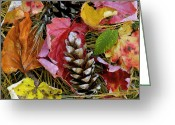 Fall Colors Greeting Cards - Forest Floor Portrait Greeting Card by Rich Franco