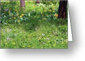 Spokane Greeting Cards - Forest Flowers Landscape Greeting Card by Carol Groenen