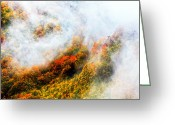 Evgeni Dinev Greeting Cards - Forest in Veil of Mists Greeting Card by Evgeni Dinev