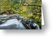 Clayton Photo Greeting Cards - Forest Jewel Greeting Card by Debra and Dave Vanderlaan
