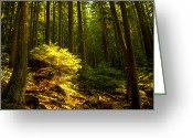 Redwood Greeting Cards - Forest Greeting Card by Matt  Trimble