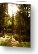 Shadows Greeting Cards - Forest Greeting Card by Nadya Ost