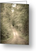 Scary Surreal Fantasy Art Greeting Cards - Forest Path Greeting Card by Svetlana Sewell