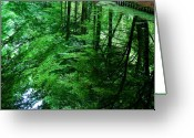 Lake Greeting Cards - Forest Reflection Greeting Card by David Bowman