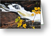 Stream Greeting Cards - Forest river in the fall Greeting Card by Elena Elisseeva