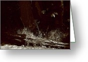 Split Rail Fence Greeting Cards - Forest Spotlight Greeting Card by Lorraine Devon Wilke