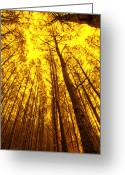 Mac Miller Greeting Cards - Forest Sun Greeting Card by M K  Miller