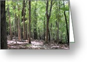 Forest Landscape Greeting Cards - Forest through the Trees Greeting Card by