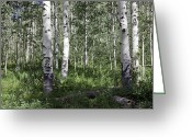 Initials Greeting Cards - Forever Aspen Trees Greeting Card by Madeline Ellis