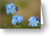 "\""blue Flowers\\\"" Greeting Cards - Forget Me Not 01 - s01r Greeting Card by Variance Collections"