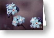 "\""blue Flowers\\\"" Greeting Cards - Forget Me Not 01 - s05dt01 Greeting Card by Variance Collections"