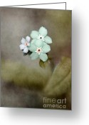 "\""blue Flowers\\\"" Greeting Cards - Forget Me Not 03 - s07bt07 Greeting Card by Variance Collections"