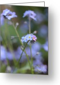 Blue Florals Greeting Cards - Forget-Me-Not Flowers Greeting Card by Jennie Marie Schell