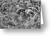 Stafford Greeting Cards - Forgotten BW Greeting Card by JC Findley