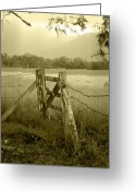 Barbed Wire Greeting Cards - Forgotten Fields Greeting Card by Holly Kempe