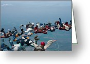 Skydiving Greeting Cards - Formation Skydiving Greeting Card by Keith Kent