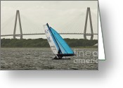 Sailing Cat Greeting Cards - Formula 18 Sailing Cat Big Booty Charleston SC Greeting Card by Dustin K Ryan