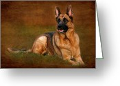 Purebreed Greeting Cards - Forrest The German Shepherd Greeting Card by Angie McKenzie