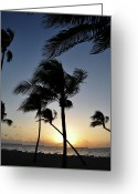 Trees Photograph Greeting Cards - Fort Lauderdale Palms Greeting Card by Kelly Wade