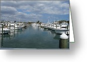 Cabbage Palm Trees Greeting Cards - Fort Pierce City Marina Greeting Card by Lynda Dawson-Youngclaus