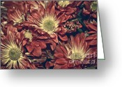Flowers Greeting Cards - Foulee de petales - 04b Greeting Card by Variance Collections